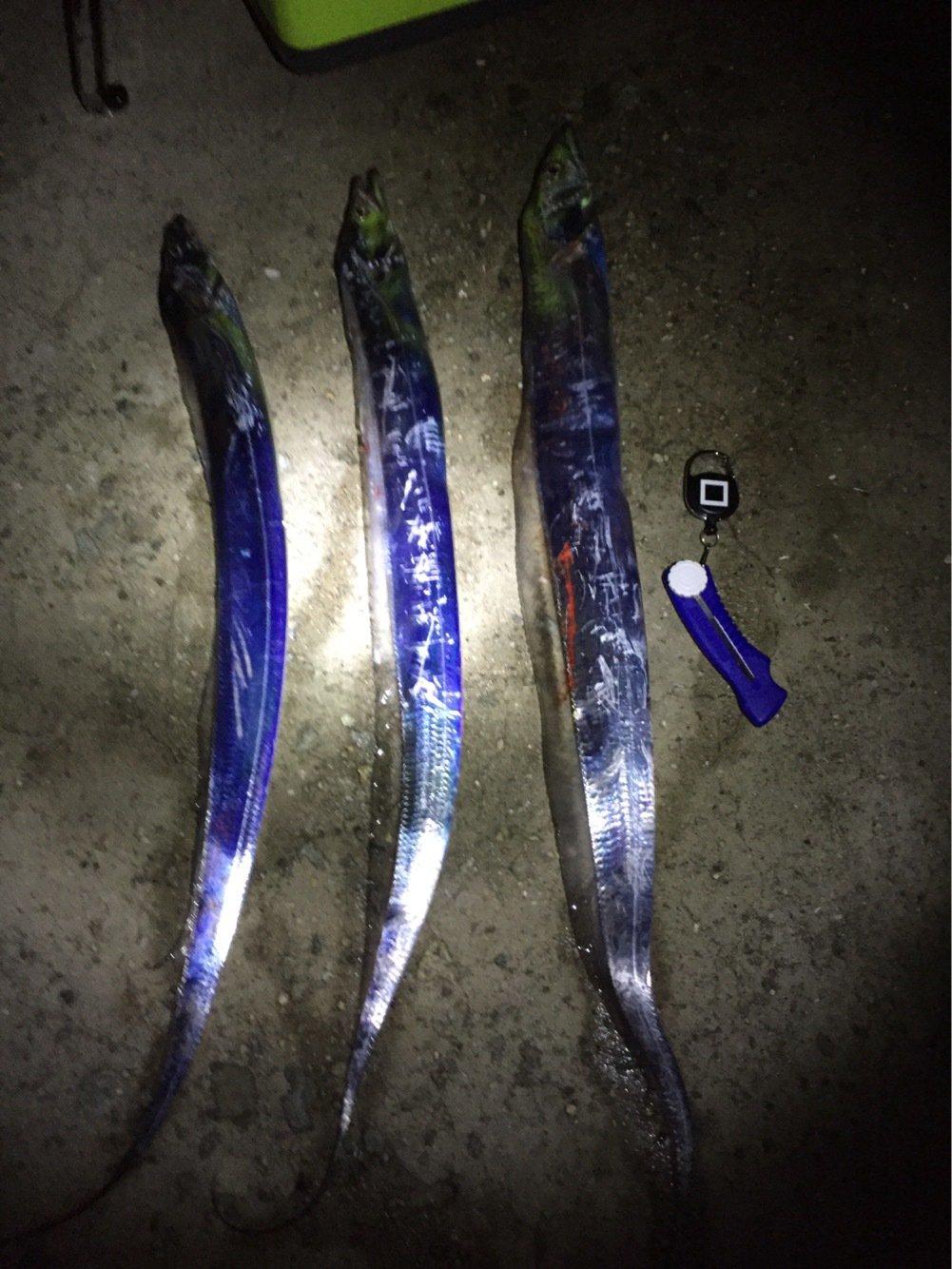 大田俊介さんの投稿画像,写っている魚はタチウオ