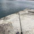Sho Hinataさんの岩手県久慈市での釣果写真
