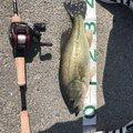 てぽ丼さんの福岡県三潴郡での釣果写真