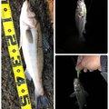 かずさんの千葉県での釣果写真