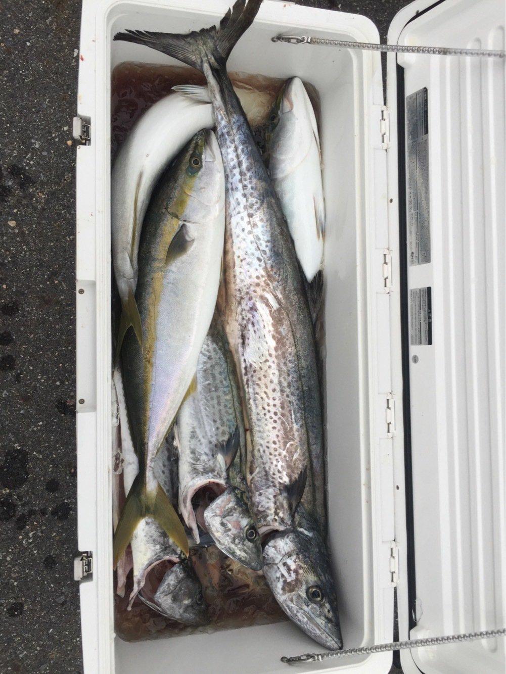 Redhorseさんの投稿画像,写っている魚はサワラ