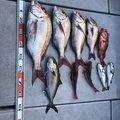 釣りジャンキーさんの宮崎県延岡市での釣果写真