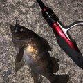 釣り課長さんの香川県での釣果写真