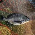 飯島   直道さんの千葉県での釣果写真