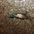 釣りマンさんの沖縄県宜野湾市での釣果写真