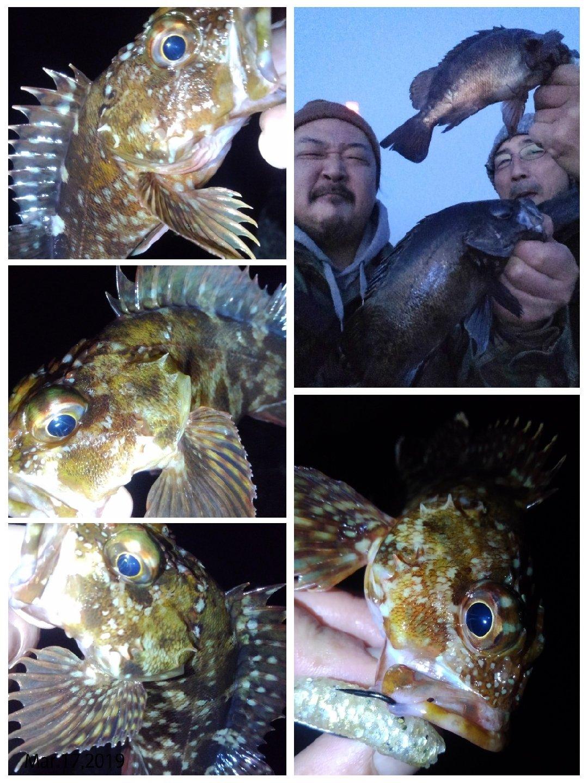 KRO さんの投稿画像,写っている魚はメバル,カサゴ
