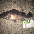 頭文字Dさんの北海道虻田郡での釣果写真