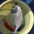 やっすーさんの千葉県での釣果写真
