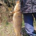 思春さんの新潟県西蒲原郡での釣果写真