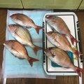 たかちさんの神奈川県大和市での釣果写真
