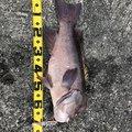 soldier fishさんの愛媛県での釣果写真