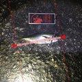 えびちゃん❗️さんの兵庫県での釣果写真