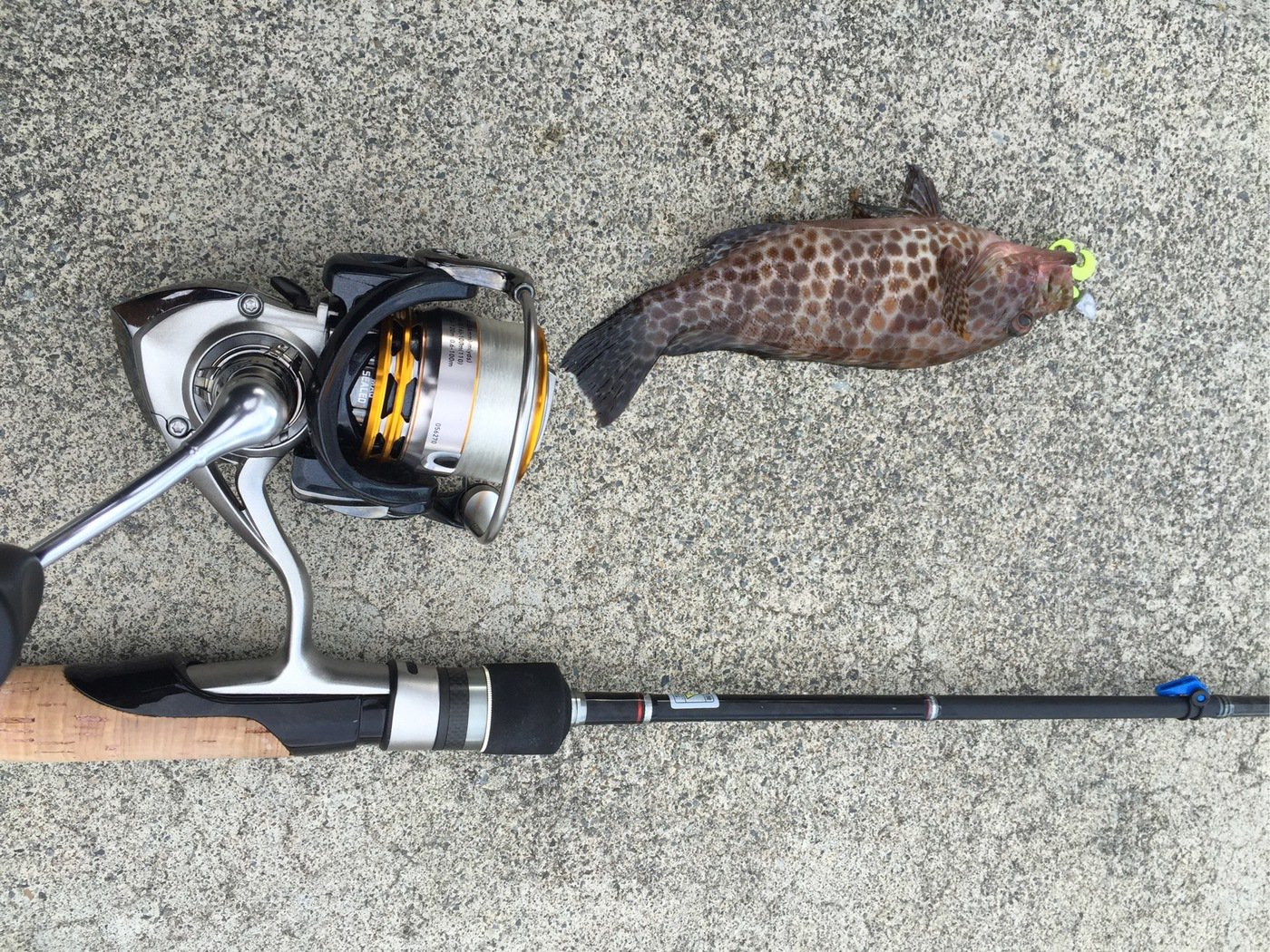 ライスよしおさんの投稿画像,写っている魚はオオモンハタ