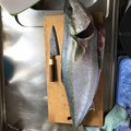 Takkunさんの和歌山県での釣果写真