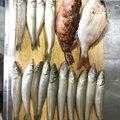 バラし屋 ノブさんさんの熊本県での釣果写真