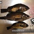 のぶさんの広島県での釣果写真