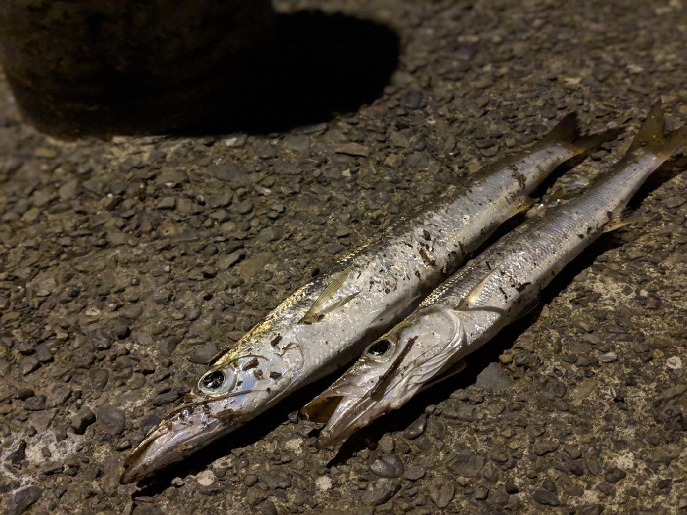 Suzu Takaさんの投稿画像,写っている魚は