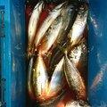 MDさんの宮崎県日南市での釣果写真