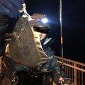 たなすけさんの青森県八戸市での釣果写真