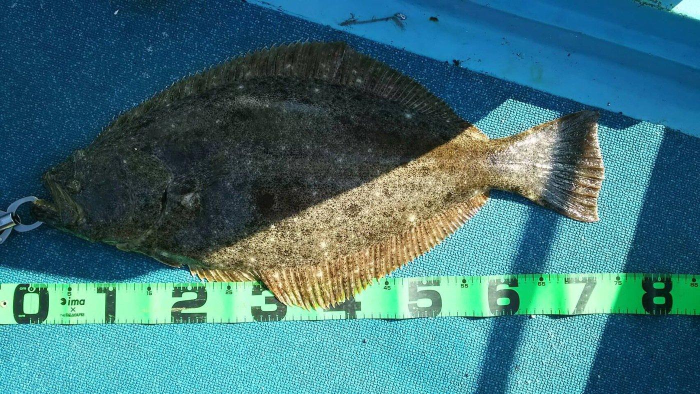 磯太郎さんの投稿画像,写っている魚はイサキ