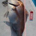 りっくすさんの三重県での釣果写真