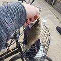 m.takayuki さんの熊本県での釣果写真