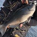 Harukiさんの岡山県和気郡での釣果写真