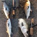 hikaruさんの福岡県福岡市でのスズキの釣果写真