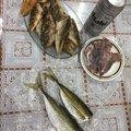 波那の慶治さんの大分県大分市での釣果写真