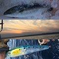 タマさんの千葉県勝浦市での釣果写真