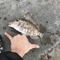 まさかかさんの沖縄県国頭郡での釣果写真