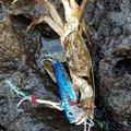 umiyama7さんの山形県飽海郡での釣果写真