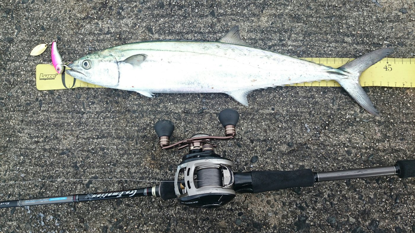 かわじゅんさんの投稿画像,写っている魚はサワラ