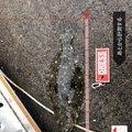ゴワゴワさんの千葉県南房総市での釣果写真