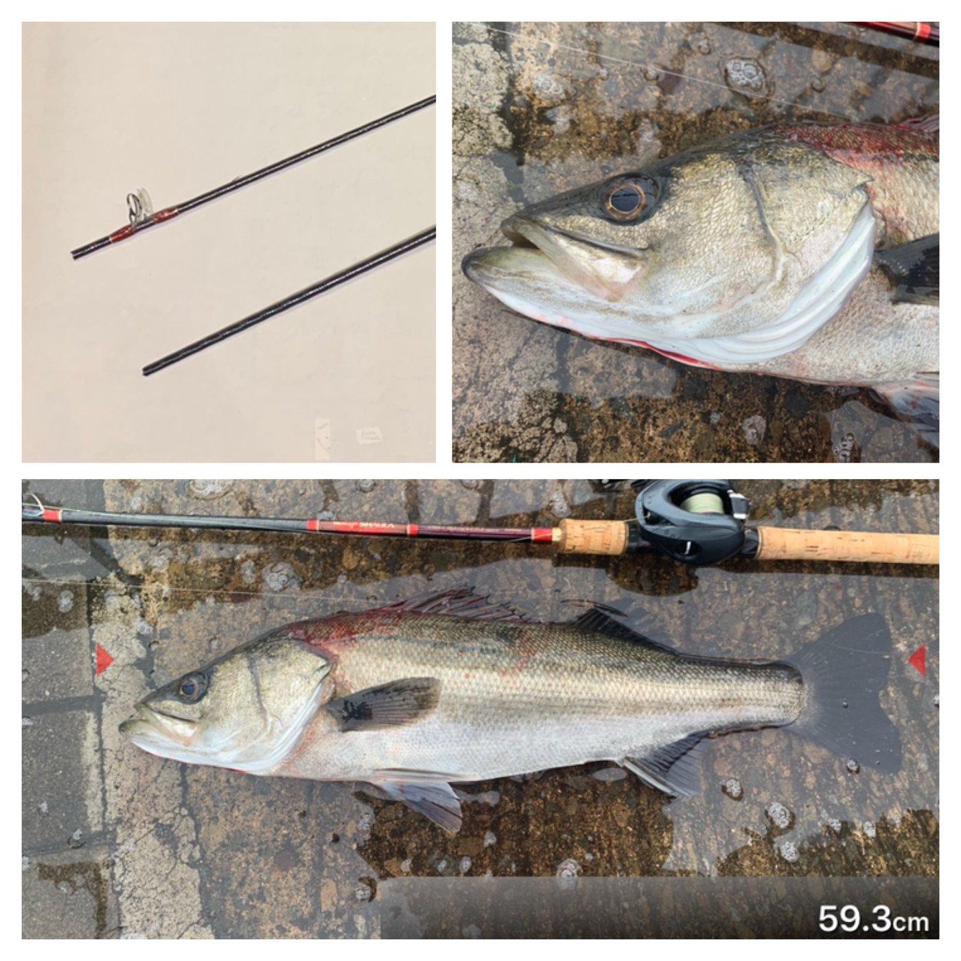 ととのすけさんの投稿画像,写っている魚はスズキ
