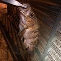 KNさんの石川県野々市市での釣果写真