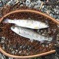 kappatoshiさんの奈良県吉野郡での釣果写真