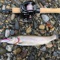 カツミさんの滋賀県犬上郡での釣果写真