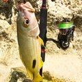 88diverさんの沖縄県名護市での釣果写真