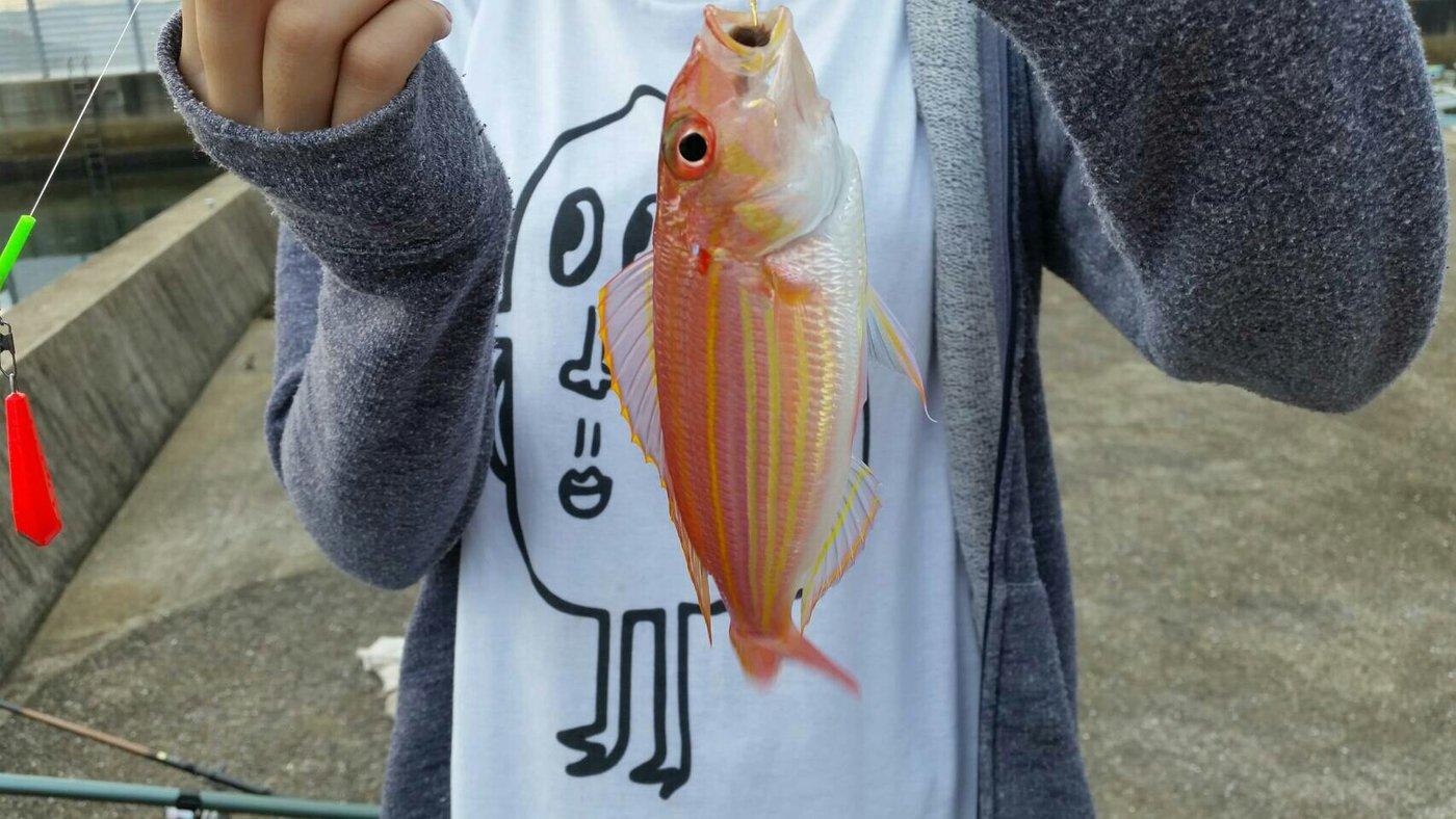 。 は る なさんの投稿画像,写っている魚はイトヨリダイ