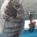 goodloserさんの千葉県安房郡での釣果写真