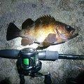 漢棒さんの青森県青森市での釣果写真