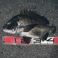 御伽さんの千葉県船橋市での釣果写真