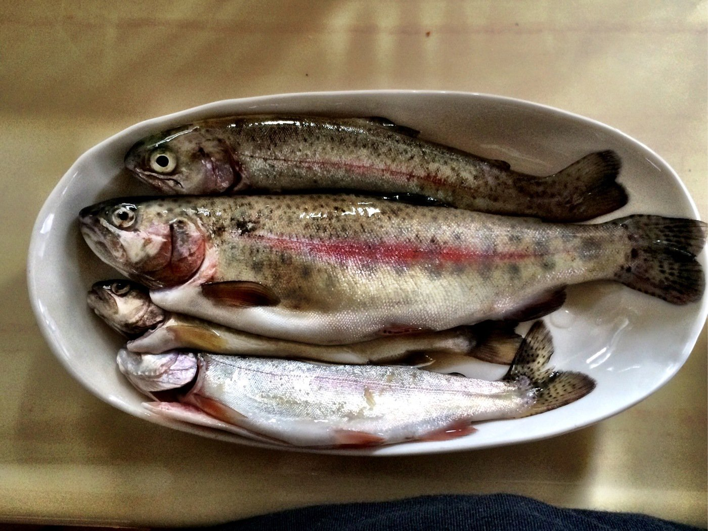 takasixさんの投稿画像,写っている魚はニジマス