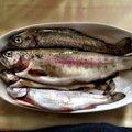 takasixさんの岩手県八幡平市での釣果写真