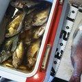 ビビカズさんの熊本県天草市での釣果写真