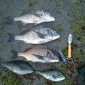 荒石 勇造さんの長崎県諫早市での釣果写真