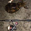 イカ助さんの和歌山県西牟婁郡での釣果写真