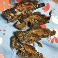 💡高速ナブラさんのタケノコメバルの釣果写真