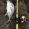 タマさんの沖縄県南城市での釣果写真